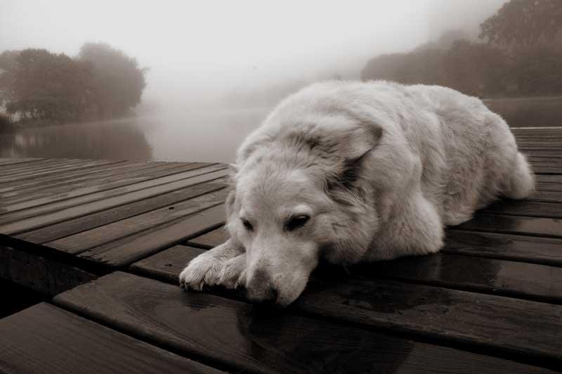 Картинки про животных с надписями грустные, для друзей