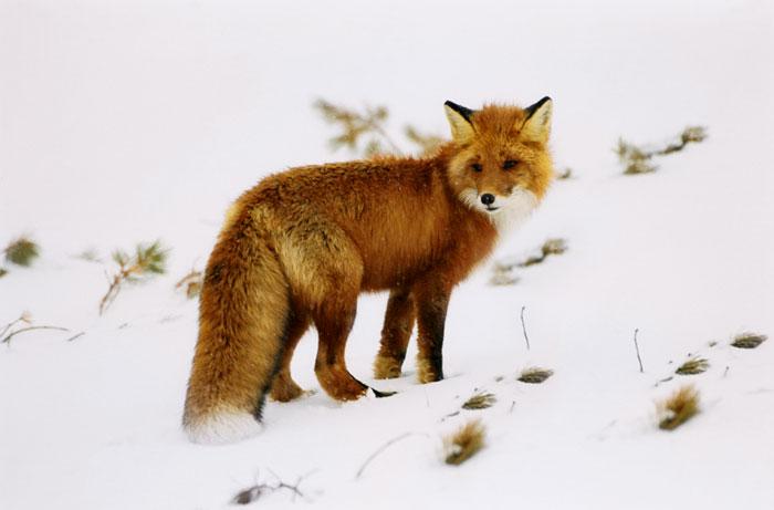 Дата закрытия зимней охоты в мордовии