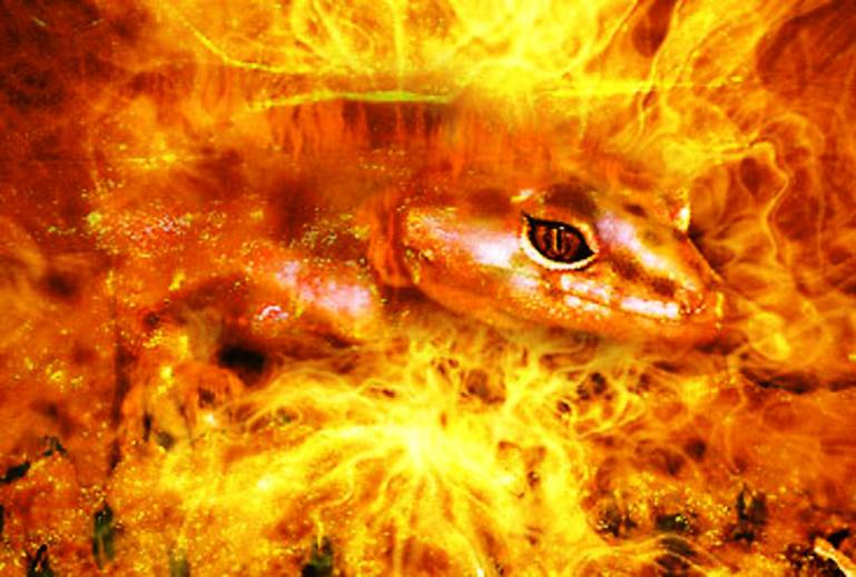 Fire salamander elemental