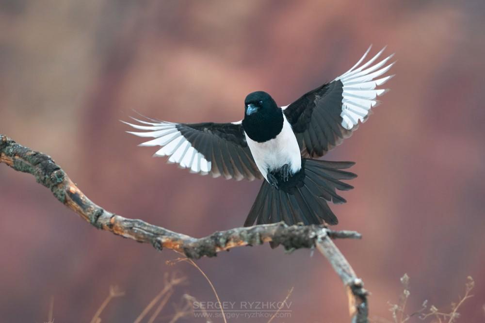 Названия лесных птиц Название и виды птиц Птицы России