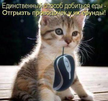https://www.proza.ru/pics/2016/01/04/2020.jpg