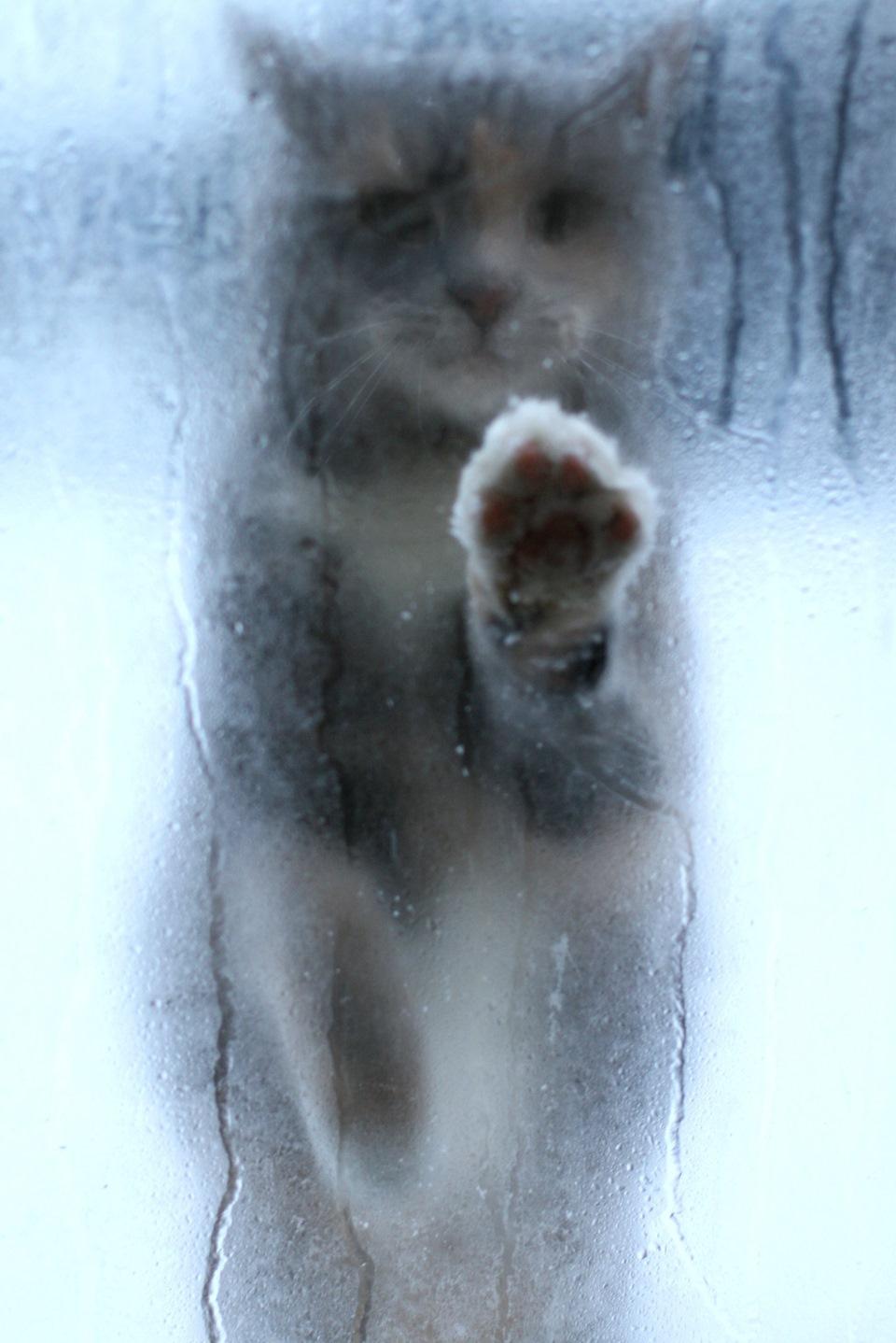Фото кота за окном