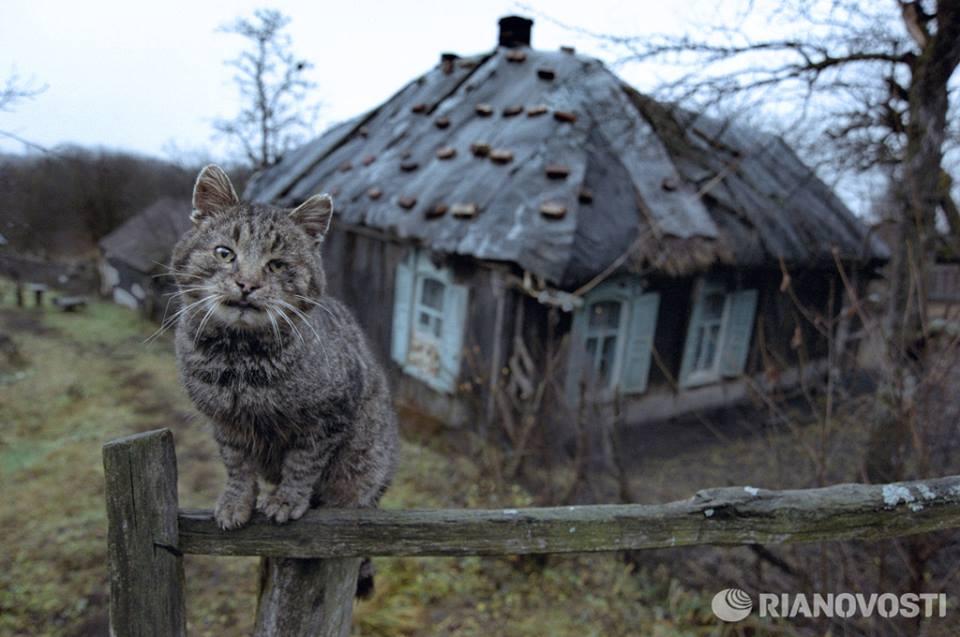 Землю в остров Самотраки дом в деревне