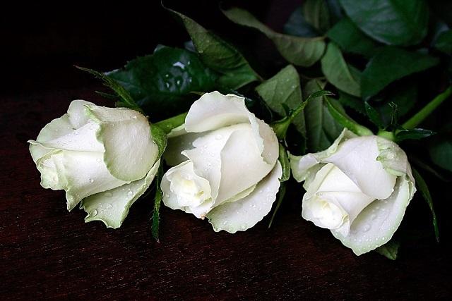 Что говорит белая роза