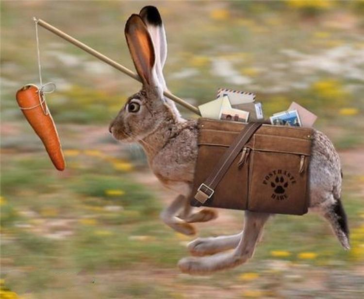Картинки приколы про зайцев нет, открытки цветы