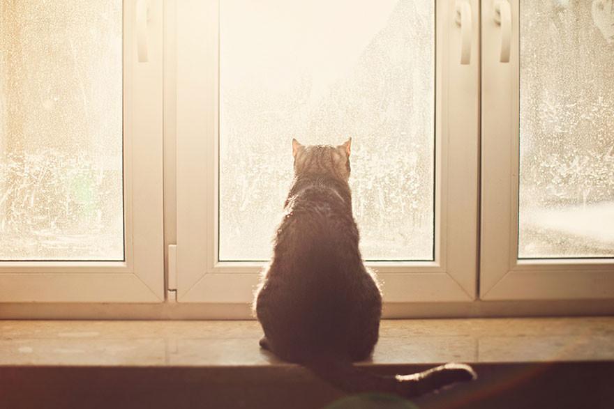 Картинки ждущих котов
