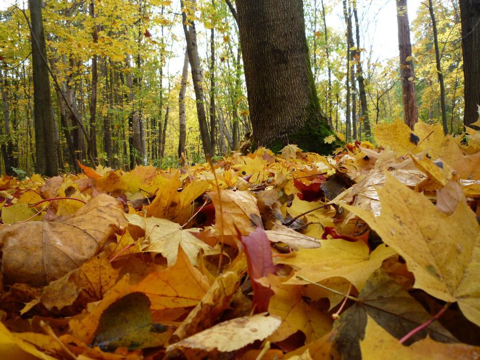 увеличением осенний день закружит листопадом стихи обеспечения