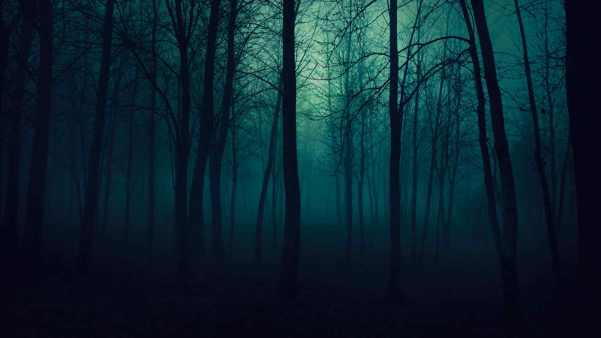 темный лес картинка
