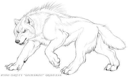 Werewolf face sketches