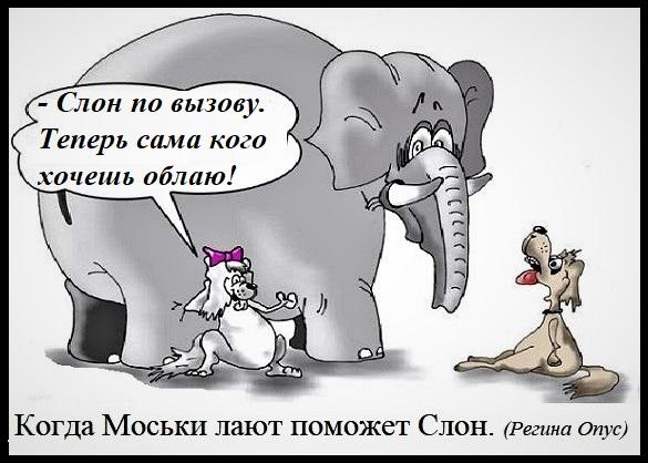 Слон и моська прикольные картинки, лучшей воспитательнице открытка