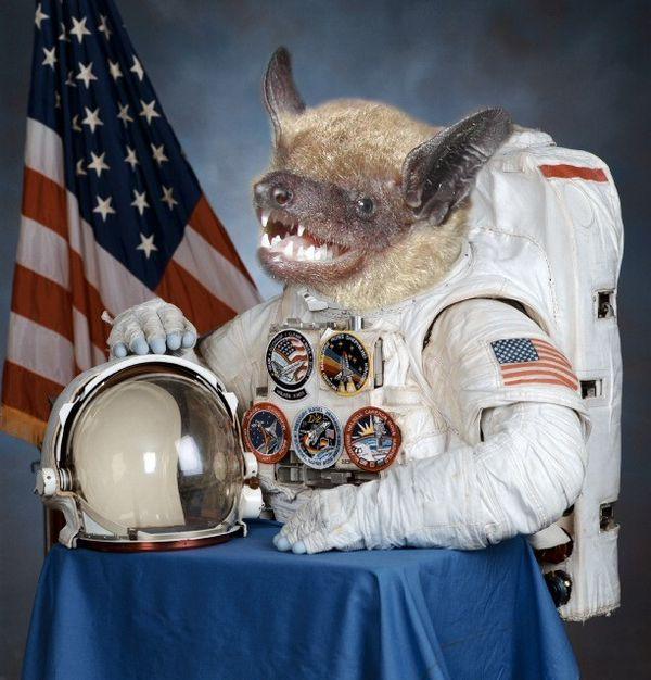 Смешные картинки космонавта, открытка оформление