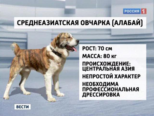 ООО, на каком месте по интелекту русская овчарка эверест отзывы Брянской