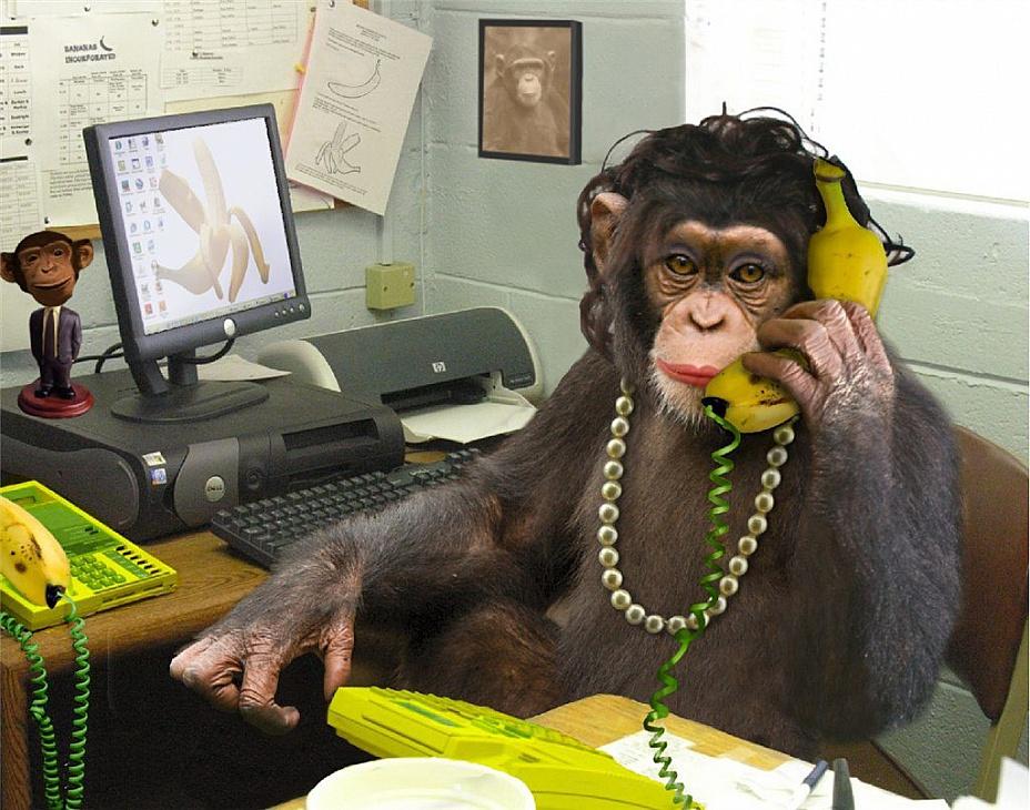 Картинка прикольная с надписями про обезьянку
