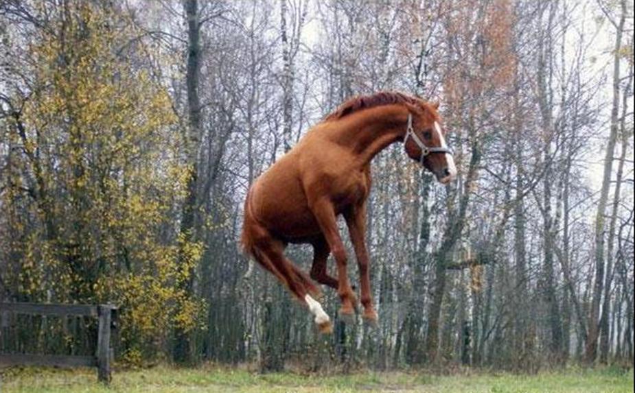 Картинки для, прикольный открытки с лошадьми