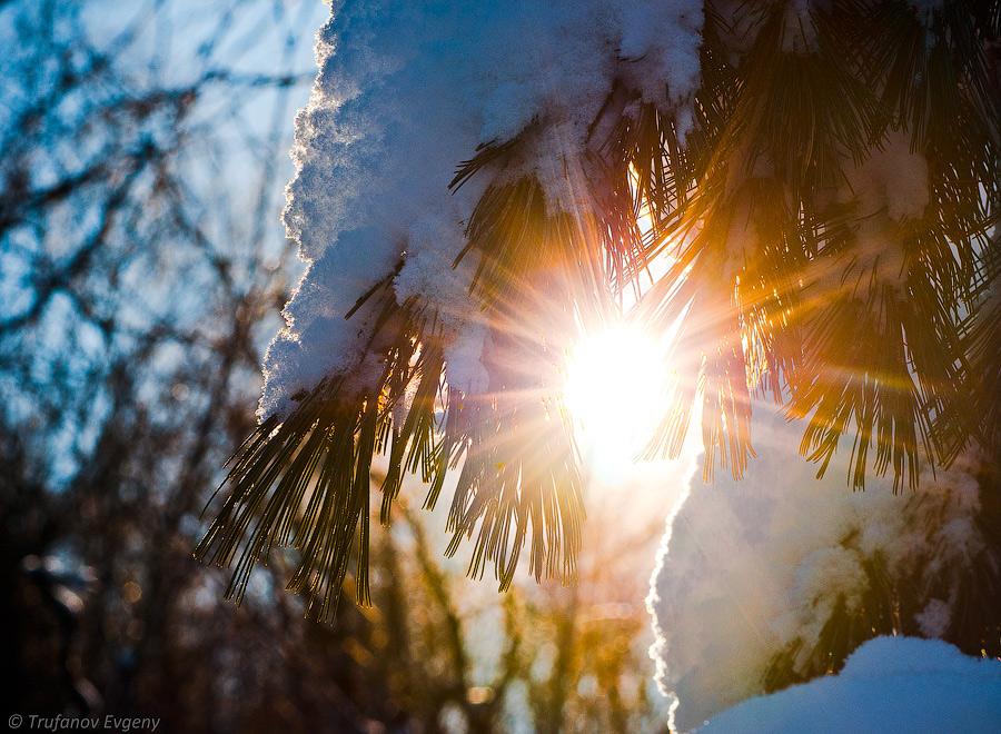 понять, яркое солнце весной фото растение