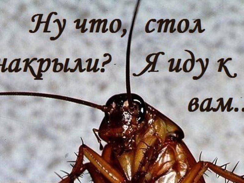 Выпуском, таракан прикольные картинки