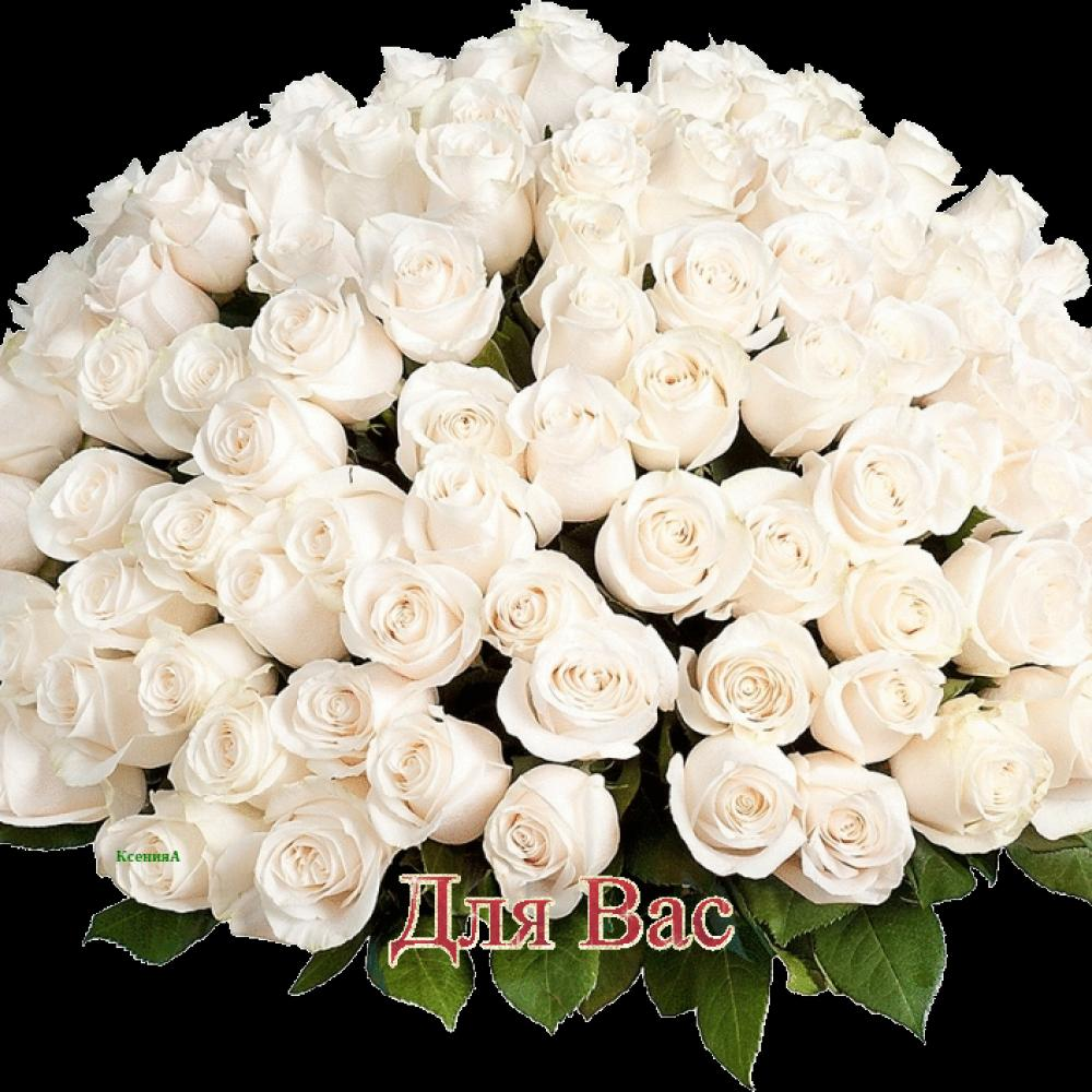с днем рождения любимая картинки белые розы прожили вместе десять