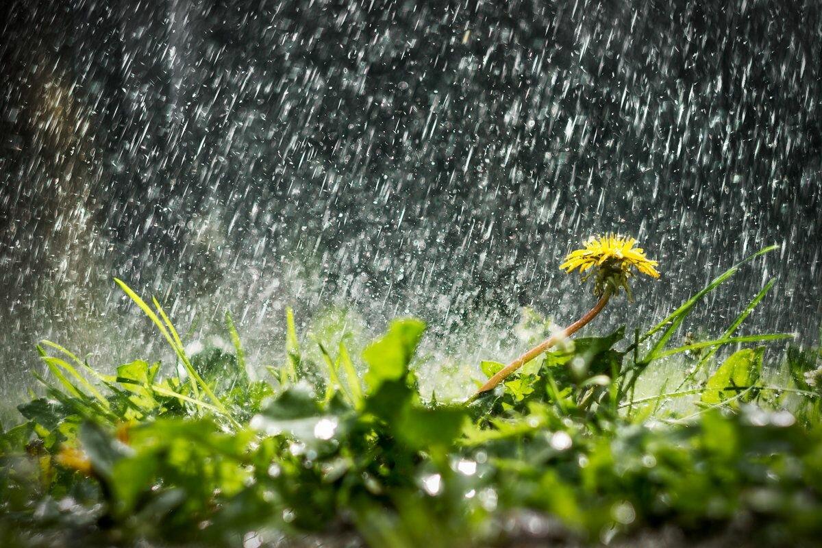 Осенний дождь гифы татуажа век