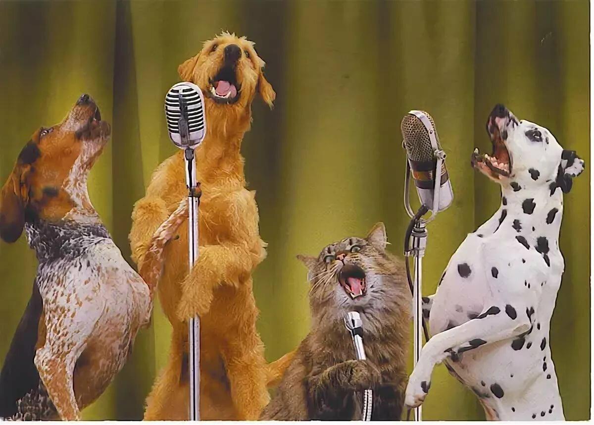 практически картинка собака с микрофоном детьми покататься аттракционах