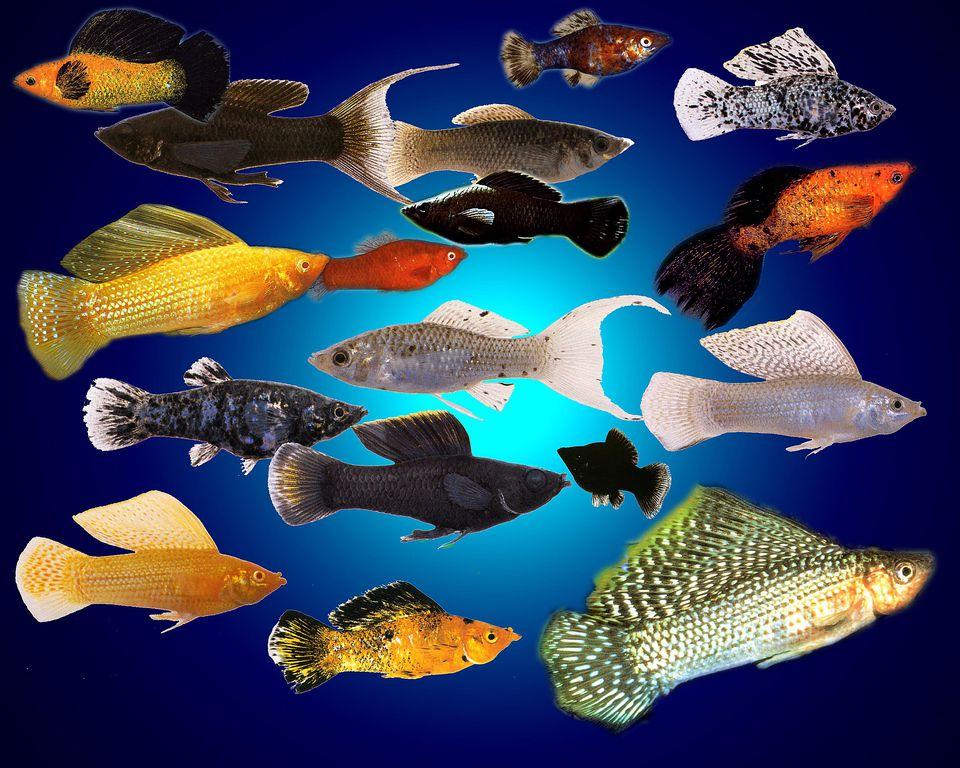 остановок классификация рыб аквариумных с фото искать качественную