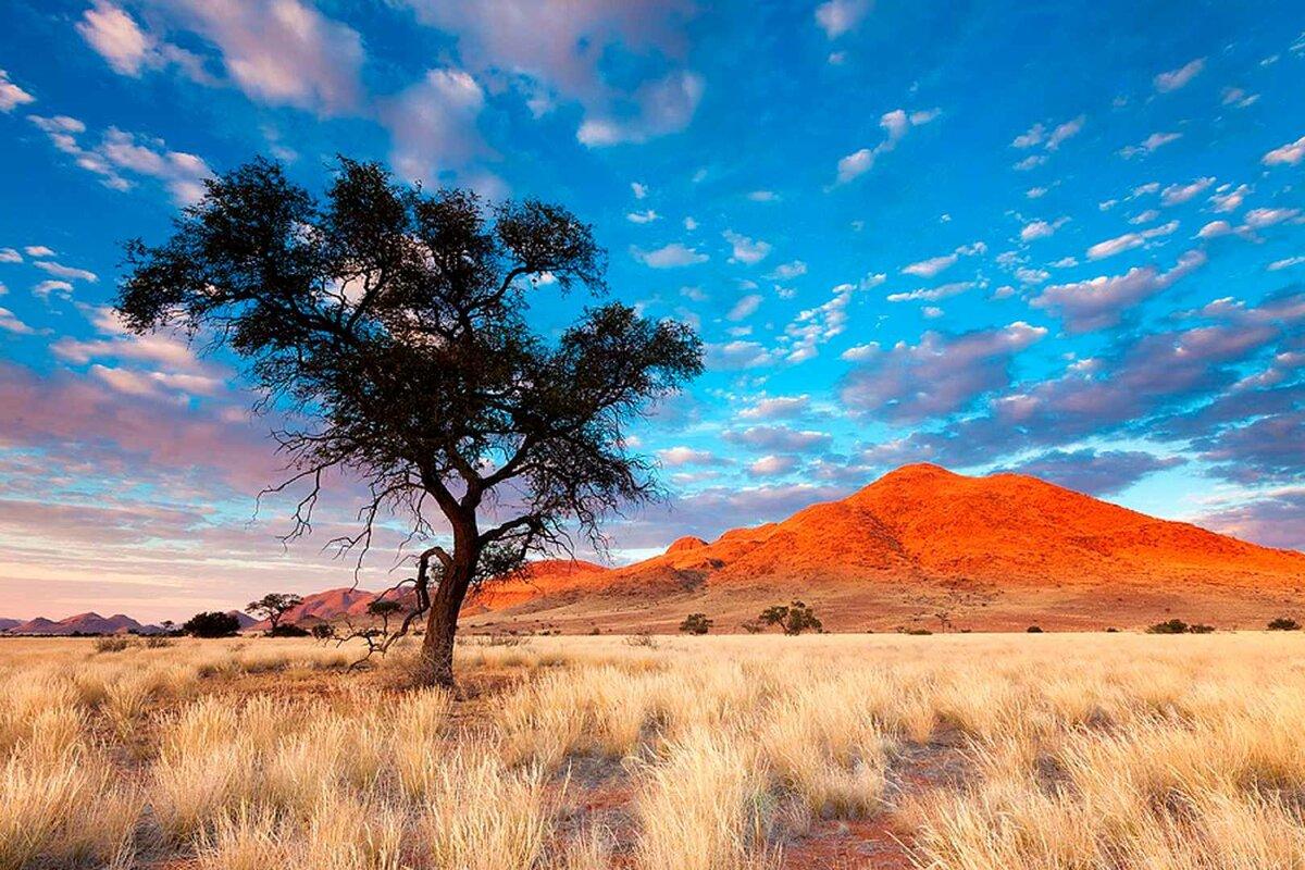рихард африканские пейзажи картинки отсутствие